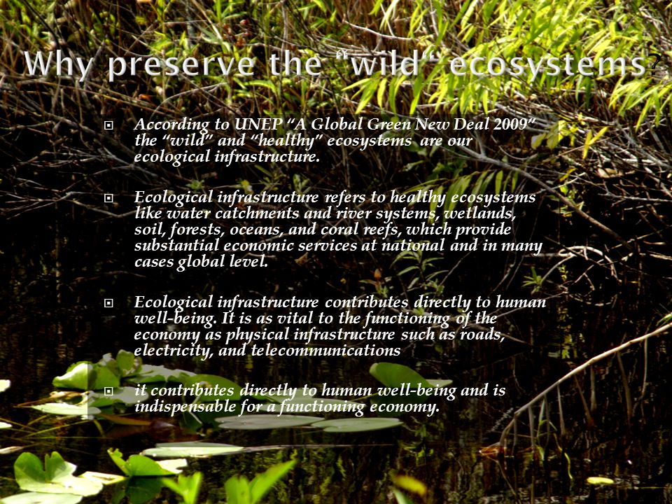 Why preserve the wild ecosystems