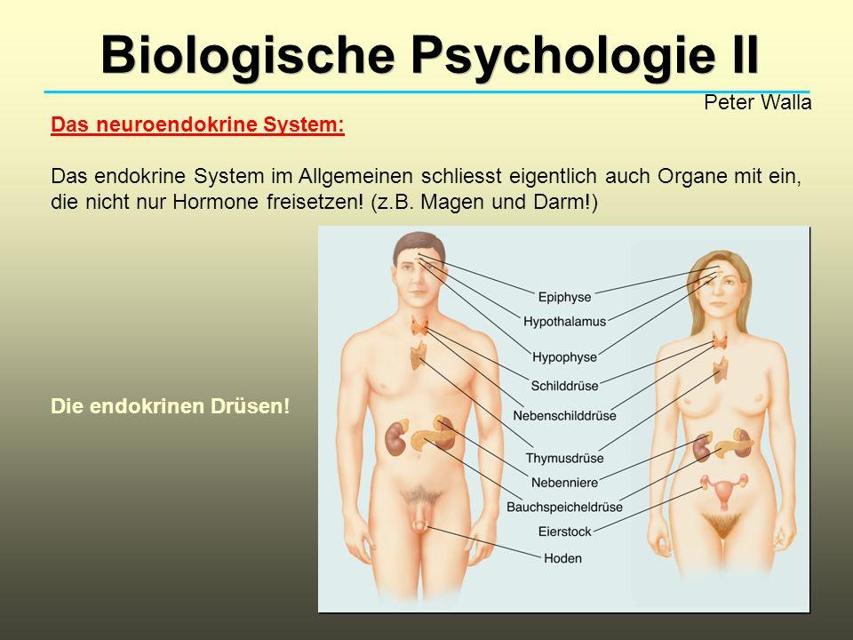 Biologische Psychologie II - ppt video online herunterladen