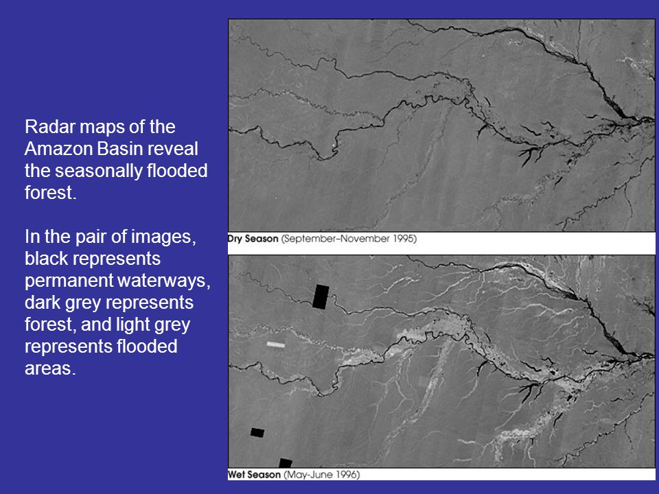 Radar maps of the Amazon Basin reveal the seasonally flooded forest.