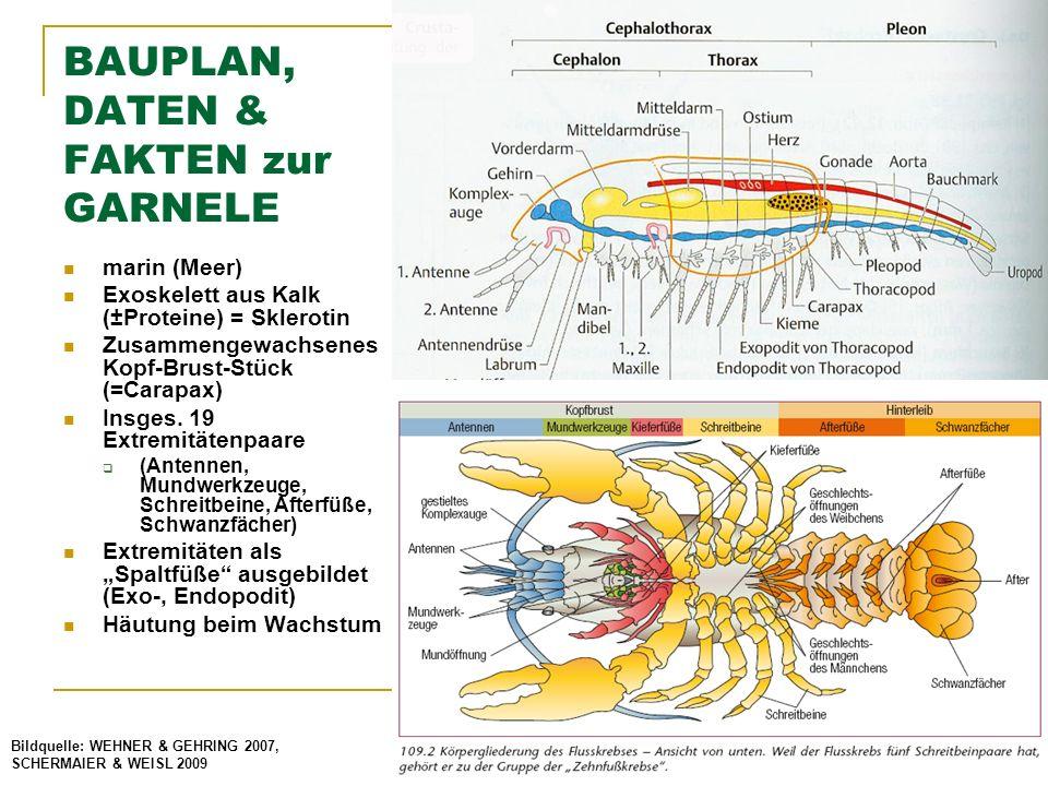 Gemütlich Teilung Mathematische Fakten Arbeitsblatt Bilder ...