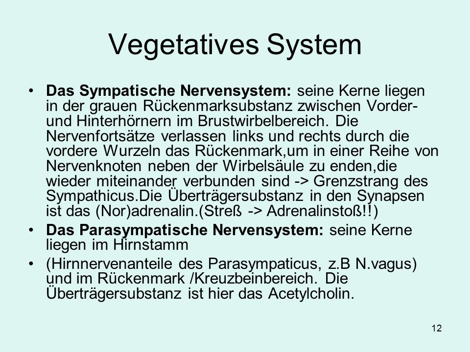 Vegetatives System