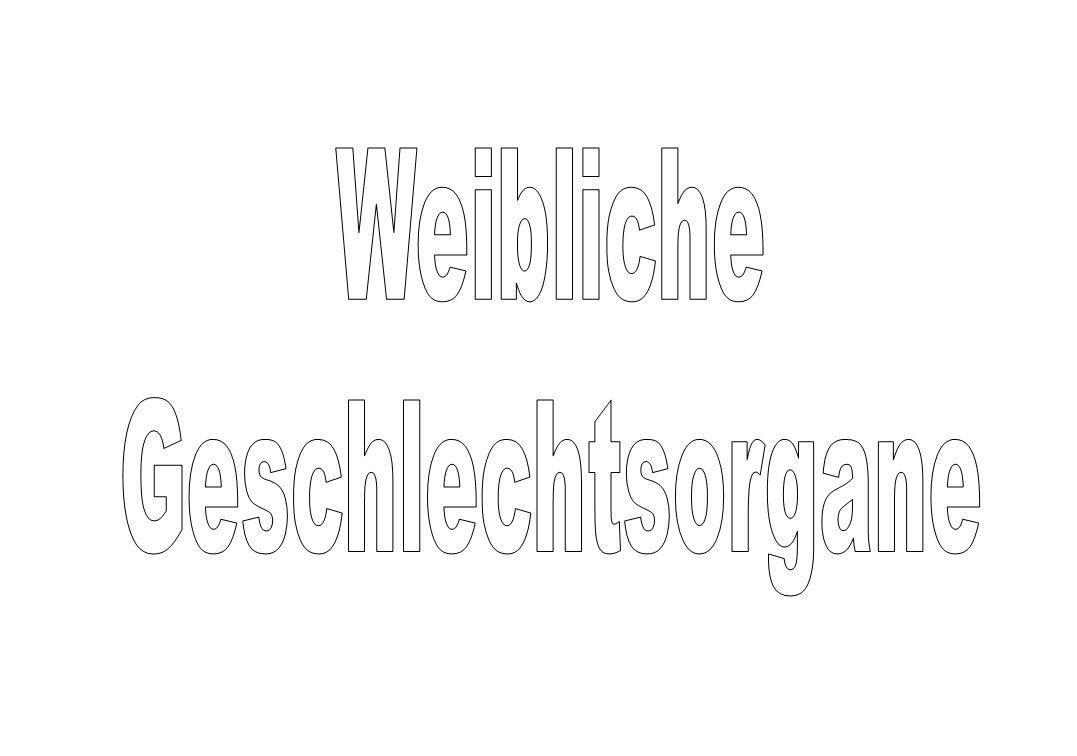 Männliche Geschlechtsorgane. - ppt video online herunterladen