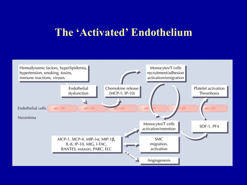 The 'Activated' Endothelium