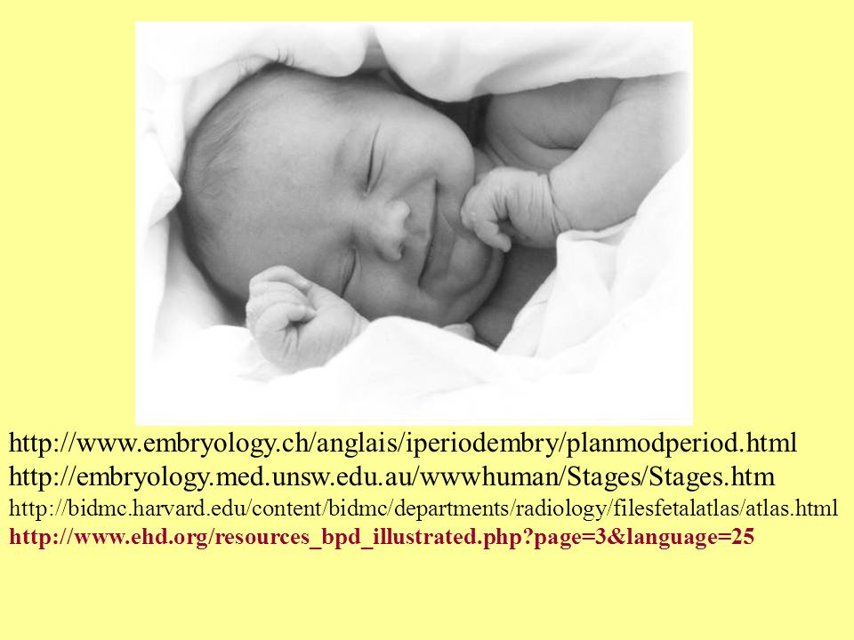 http://www.embryology.ch/anglais/iperiodembry/planmodperiod.html http://embryology.med.unsw.edu.au/wwwhuman/Stages/Stages.htm.