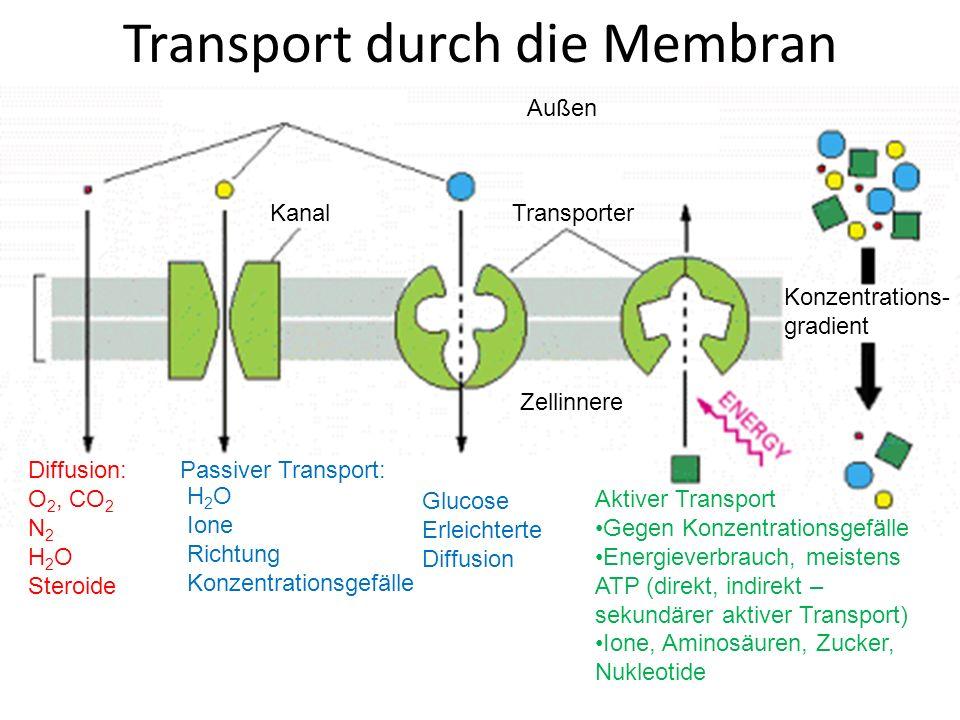 Die biologische Membran Zellorganellen der exo- und endocytotischen ...